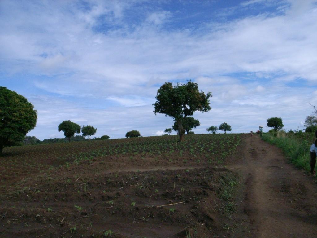 アフリカの大空