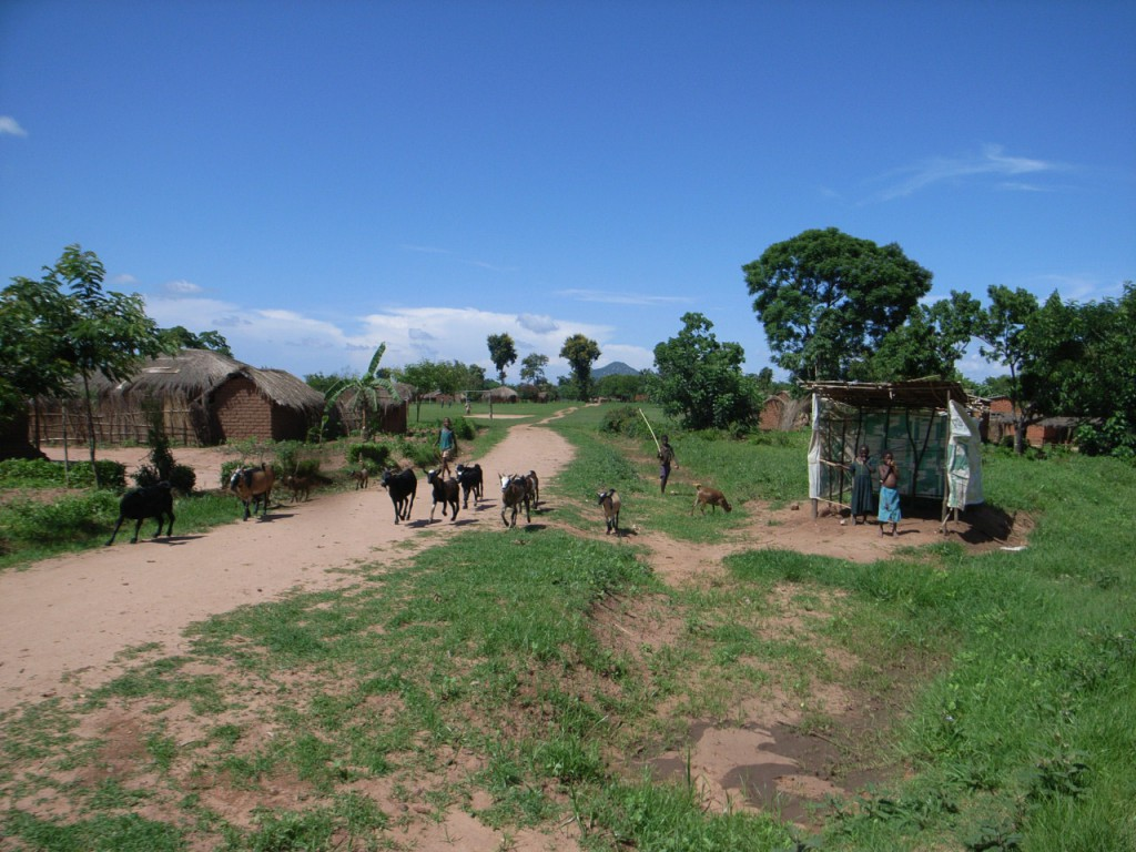 アフリカでの生活